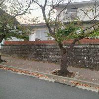 久木_191024_0004