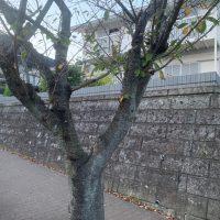 久木_191024_0021